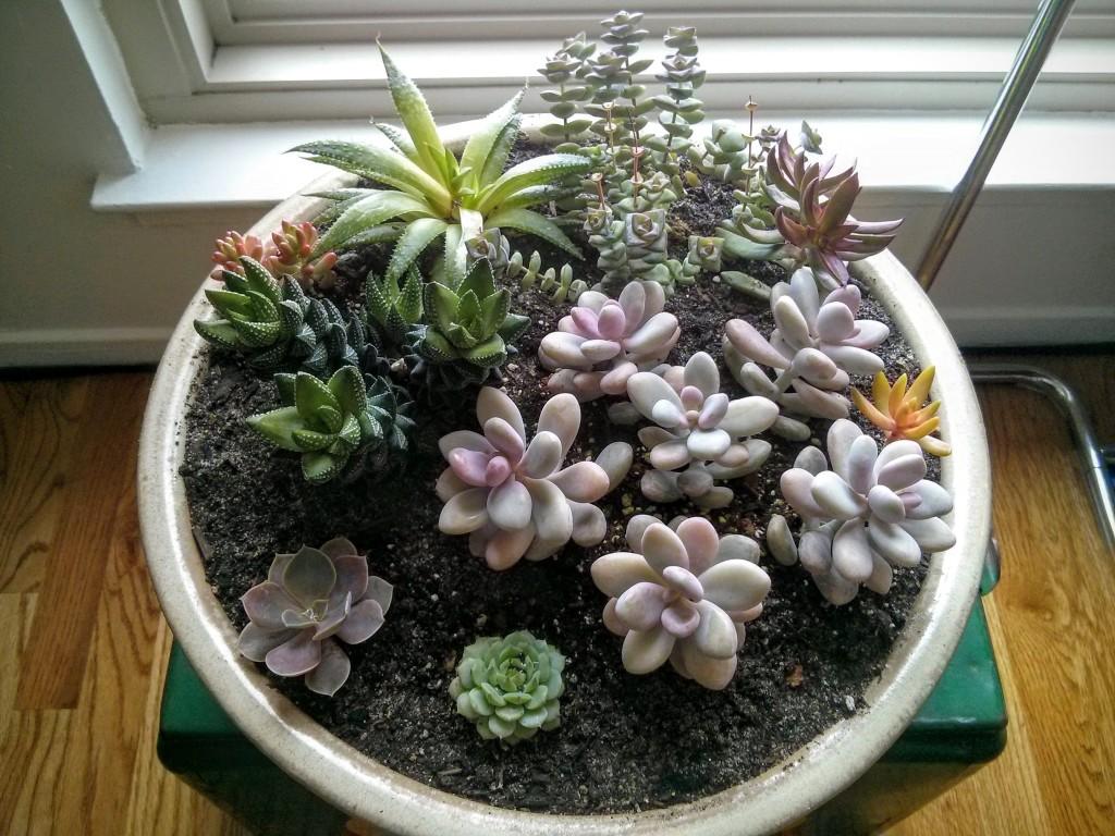 February Succulents 1